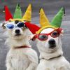 10 самых знаменитых собак в истории